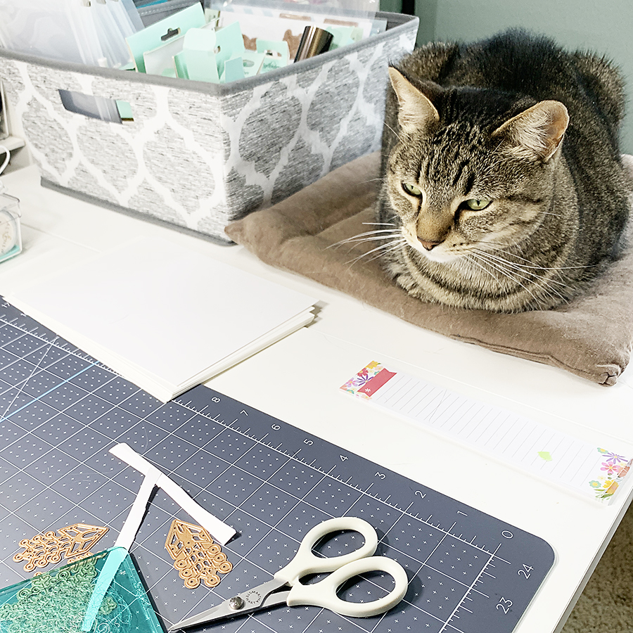Awbee in her designated spot in my craftroom.